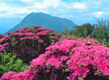 츠루미산: 벳푸의 명산에서 계절의 아름다움 목격하기