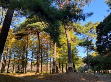 非常適合散步!在別府公園享受四季的自然風光